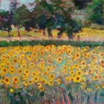"""Sunflowers and Beyond""16""X16"" Oil Available"
